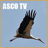 logo_ASCO